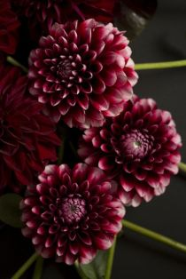 Flowers inspiration, Marsala color Trend