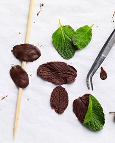 Chocolate-mint leaves on www.marthastewart.com