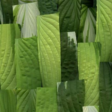 55282.01 Hosta by horticultural art on Flickr